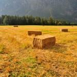 Stroh Packl am Feld
